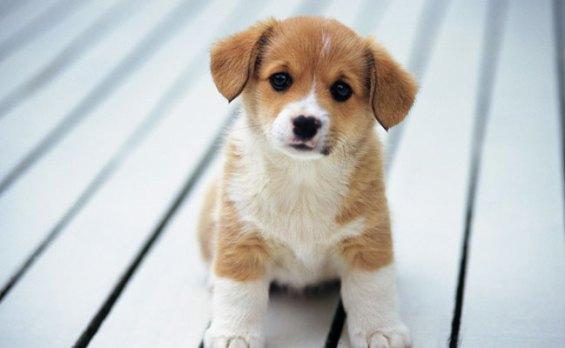 new-puppy-650x400