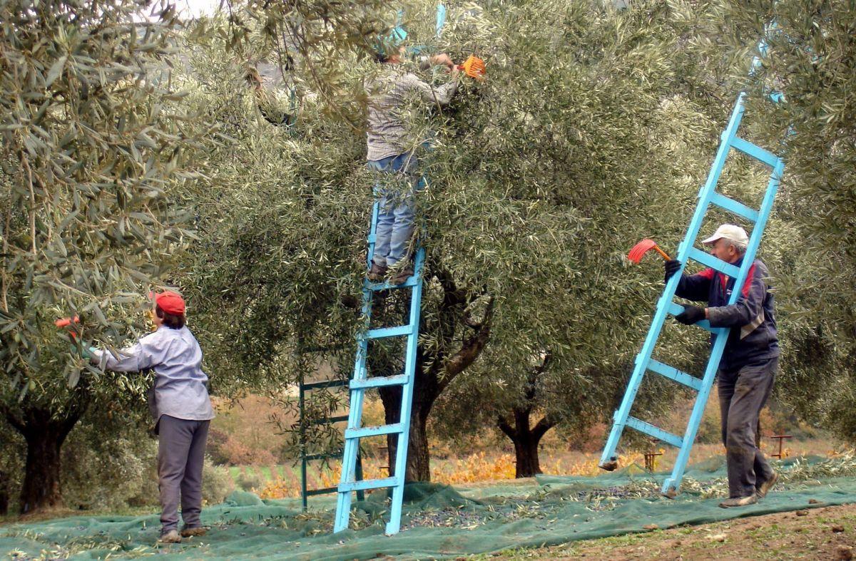 Ανασφάλιστοι αγρότες στο Πήλιο