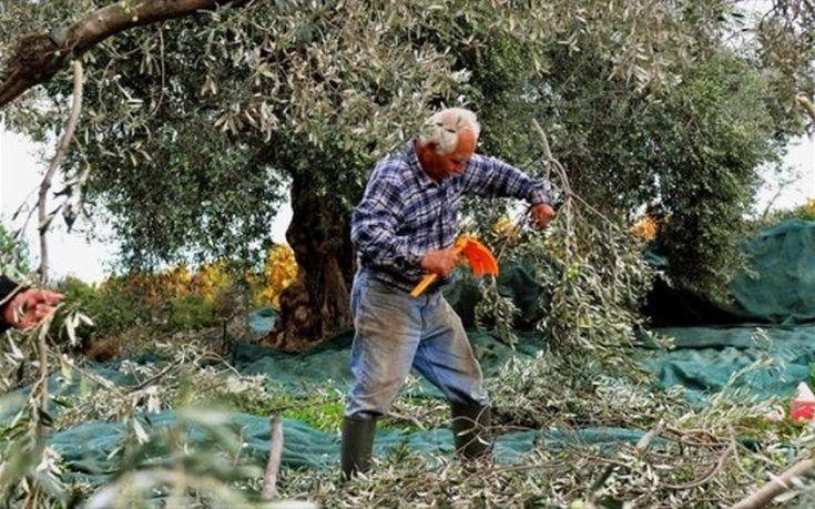 «Βρόχος» για αγρότες στο Πήλιο οι ασφαλιστικές εισφορές