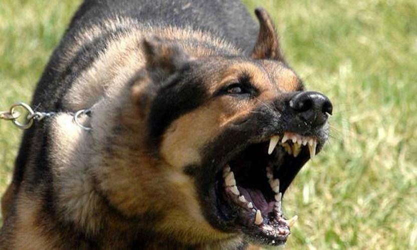 Σκύλος δάγκωσε αγόρι στον Βόλο