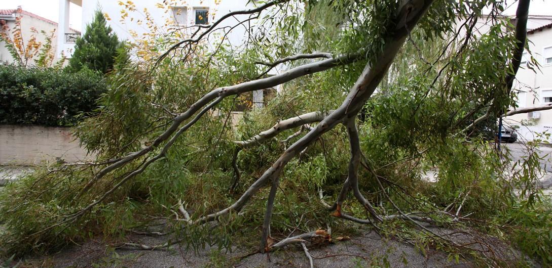 Ο Δήμος Βόλου θα αποζημιώσει δημότη για τις ζημιές στο αυτοκίνητό του από πτώση δέντρου