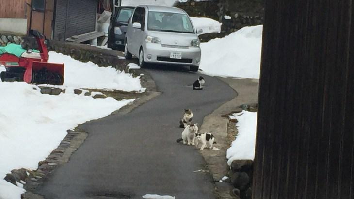 旅先で出会ったネコ in  冬の白川郷