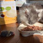 ネコにやさしい食器*ネコの食器「コレおすすめ」