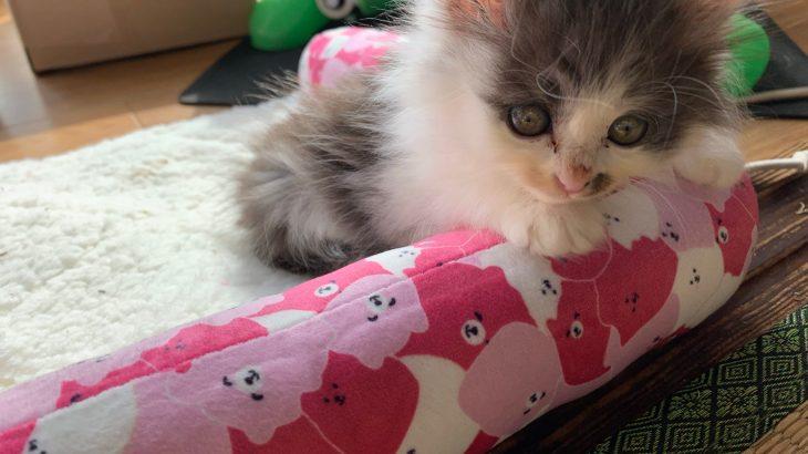 ピンクのマットとちゃ〜