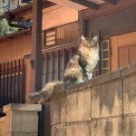 日本のネコ in  近所にお散歩中「スリスリネコさん」に出会いました