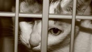 9a988e7f3ed8 Βιετνάμ  Χιλιάδες γάτες εισήχθησαν παράνομα από την Κίνα προκειμένου να  «καταναλωθούν»