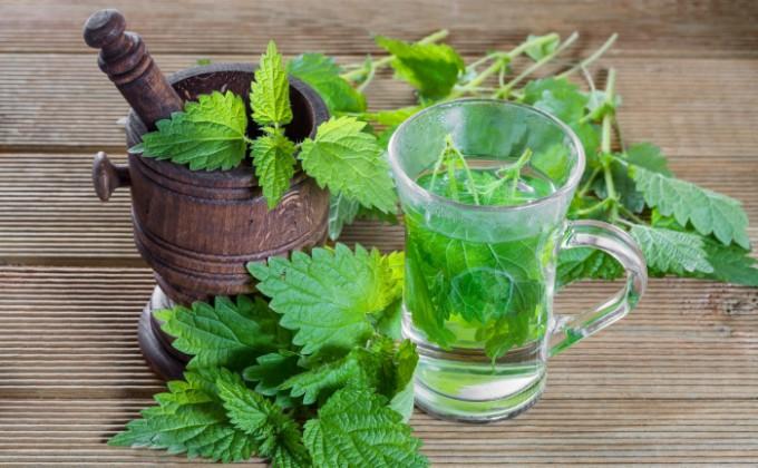 Τσάι τσουκνίδας: Οι ευεργετικές του ιδιότητες για τον οργανισμό