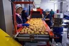 Обробка овочів