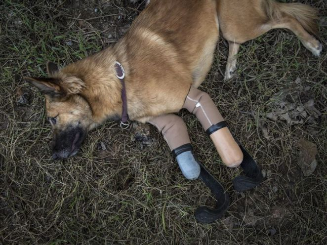 Image result for cola dog loss feet
