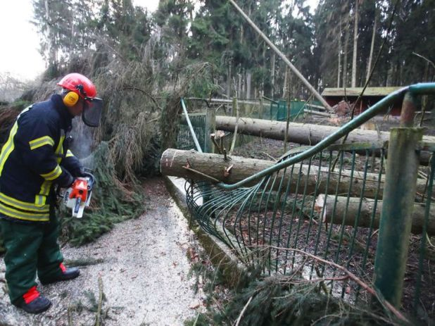 A firefighter cuts a tree after it fell on a fence of the zoological garden of Gera eastern Germany
