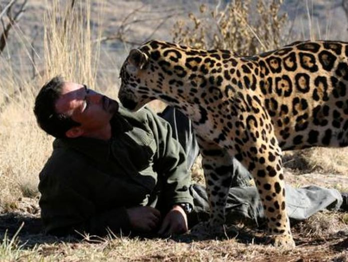 Kevin Richardson, seen with a jaguar, has become famous for his relationships with big cats Woman mauled to death at 'lion whisperer' reserve in South Africa Woman mauled to death at 'lion whisperer' reserve in South Africa skynews kevin richardson lion 4243299