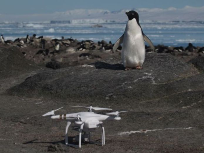 """Danger Islands Expedition Image (4): """"An Adélie penguin and Quadcopter on Brash Island, Danger Islands, Antarctica"""" Pic: Stony Brook University 'Supercolony' of 1.5 million Adelie penguins found in Antarctica 'Supercolony' of 1.5 million Adelie penguins found in Antarctica skynews adelie penguin antarctica 4245121"""