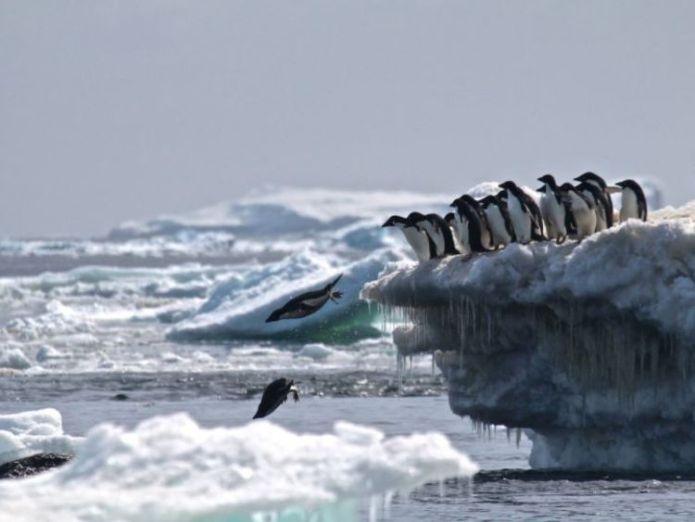 "Danger Islands Expedition Image (8): ""Adélie penguins jumping of iceberg, Danger Islands, Antarctica"" Credit: Rachael Herman, Louisiana State University, © Stony Brook University 'Supercolony' of 1.5 million Adelie penguins found in Antarctica 'Supercolony' of 1.5 million Adelie penguins found in Antarctica skynews danger antarctica adelie 4245122"