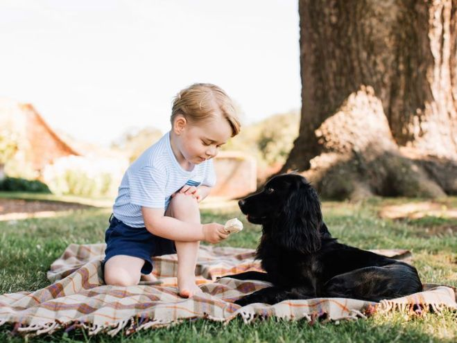 Prince George, before his third birthday with the family pet, Lupo