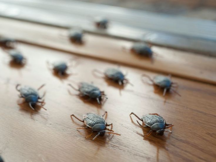 There are fears the cockroaches could escape from the farm and multiply rapidly
