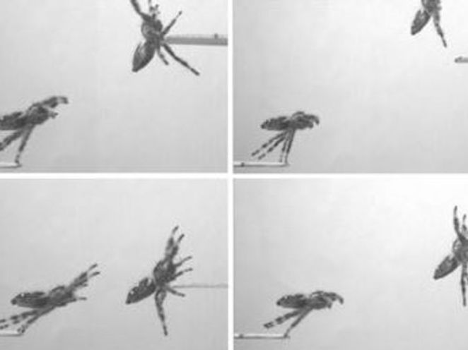 A graphic from the study shows Kim leaping from a low platform to a higher one. Credit: Nature Scientific Journal