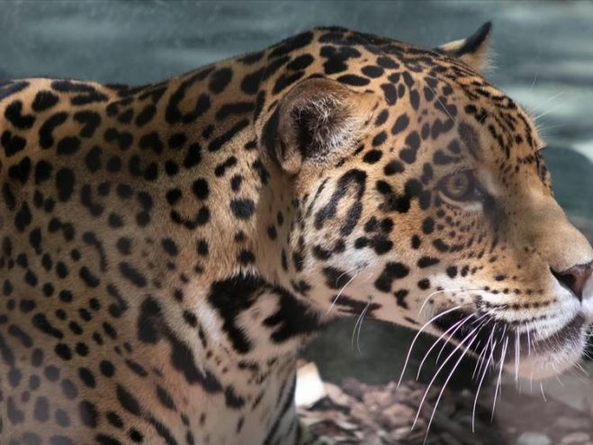 The zoo said it will not be euthanized after the attacks
