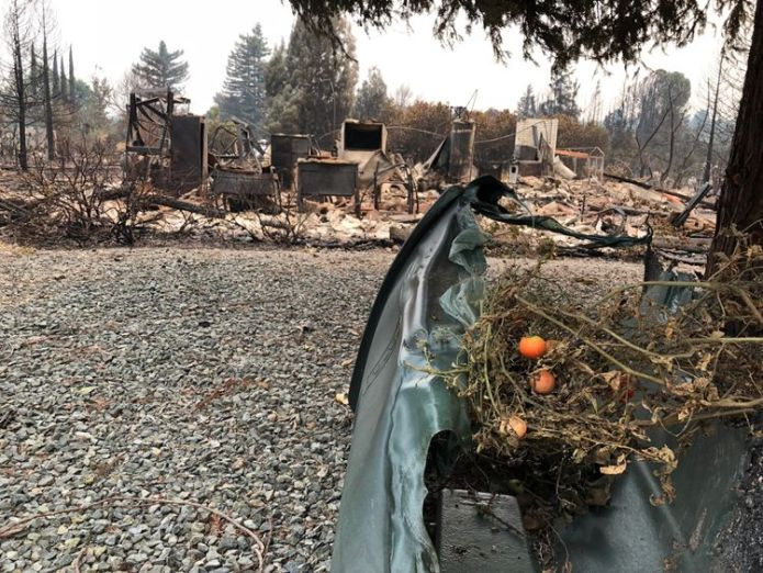 A tomato plant survives the blaze and rests on a melted wheelie bin  The eerie aftermath of devastating 'fire tornadoes' skynews california wildfires 4375458
