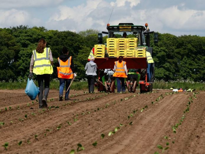 Agriculture  More than two million workers 'cheated' out of holiday skynews farm workers agriculture 4372743