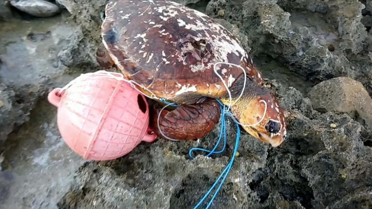 Turtles and tortoises all over the island are being affected by the pollution