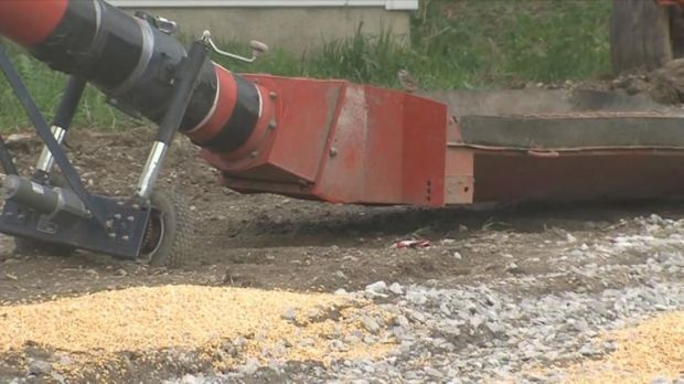Mr Kaser stepped into a grain auger on his farm in Pender, Nebraska. Pic: ABC News