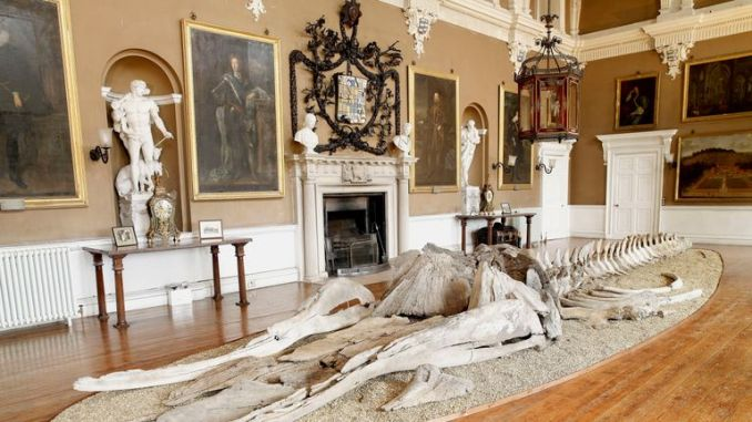 The skeleton on display at Burton Constable Hall in 2007