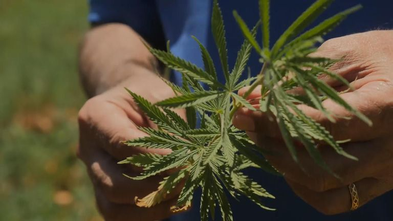 Lebanon's Bekka Valley is home to the country's 'green gold'. Could marijuana be the answer to the country's problems?