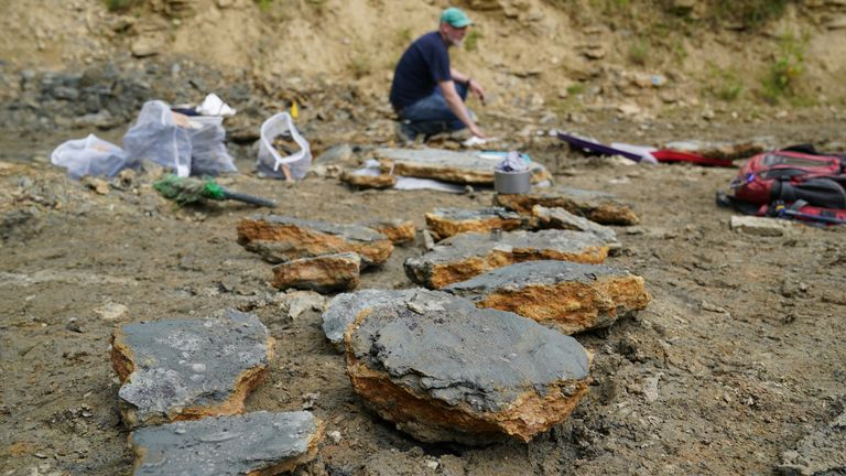 Finds are kept on the ground after they were found by paleontologists at the Natural History Museum during an excavation in a quarry in the northern Cotswolds where preserved echinoderms, sea lilies and echinoids were found from the Middle Jurassic period after the site of Neville and Sally Hollingworth discovered. Picture date: Thursday July 1, 2021.