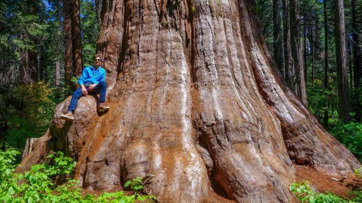 The Sequoia National Park in California is known for its giant sequoia trees. Pic: AP.