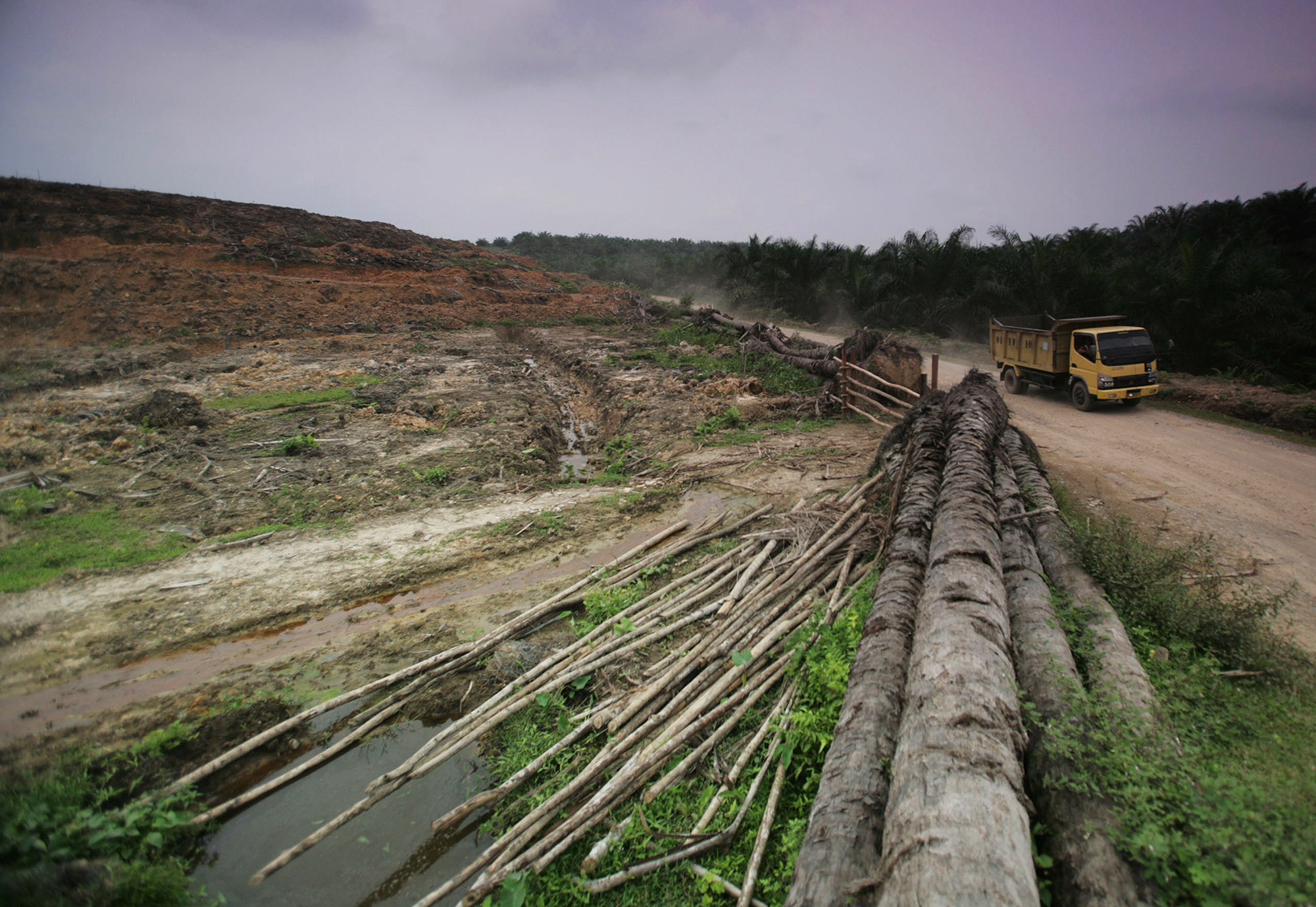 In the greater mekong in southeast asia, where land tenure. How Forest Loss Is Leading To A Rise In Human Disease Yale E360