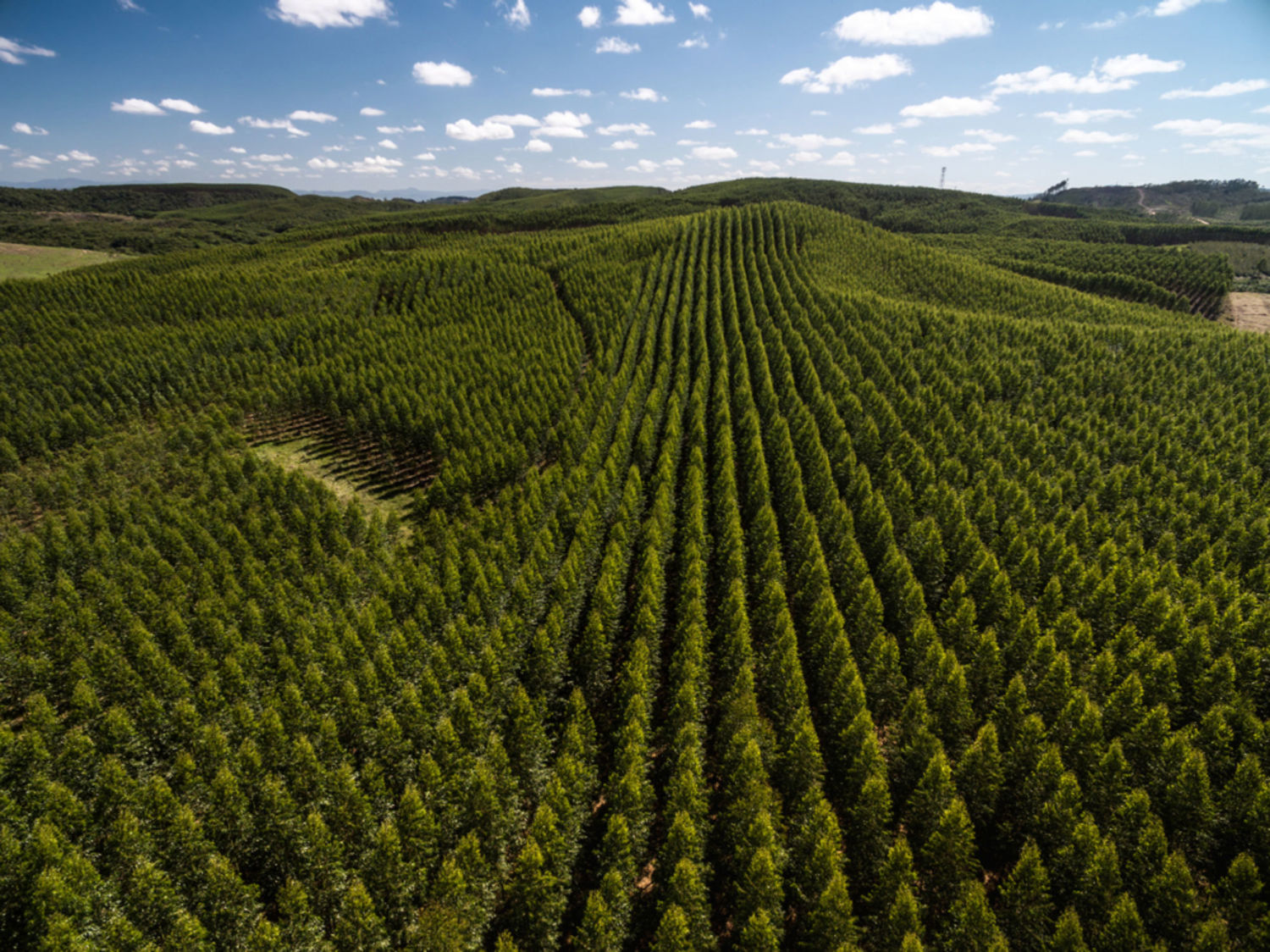 Why Green Pledges Will Not Create The Natural Forests We