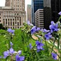To Tackle Runoff, Cities Turn to Green Initiatives