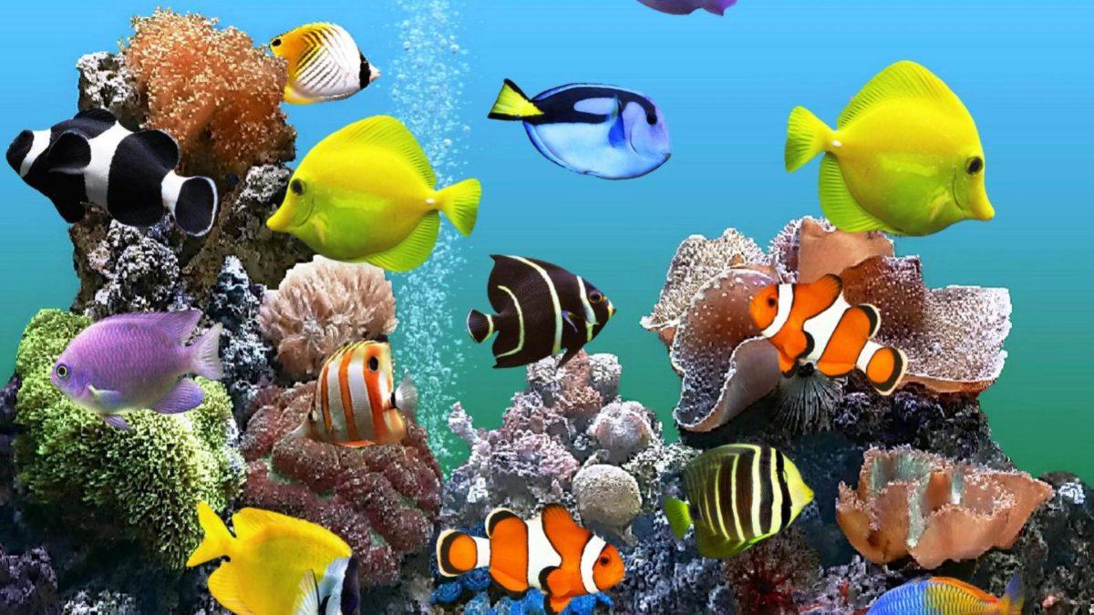 صور افضل 10 انواع اسماك الزينة الصالحة للعيش في المياه العذبة   مجلة اعرف  أكثر