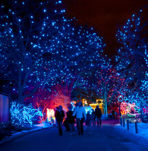 denver_zoo_zoolights_480x490