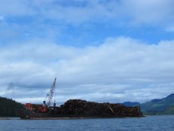 Log barge moving though Skidegate Inlet transporting thousands of tonnes of wood from Haida Gwaii