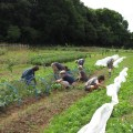 helping-at-schumacher-veg-garden_2
