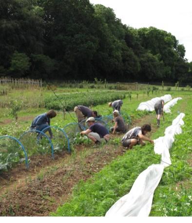 helping-at-schumacher-veg-garden_2