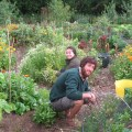 helping-at-the-schumacher-veg-garden