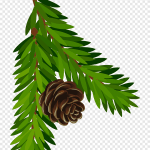 Pine Cone Illustration Conifer Cone Pine Branch Fir Pine Branch With Cone Art Twig Spruce Png Pngegg