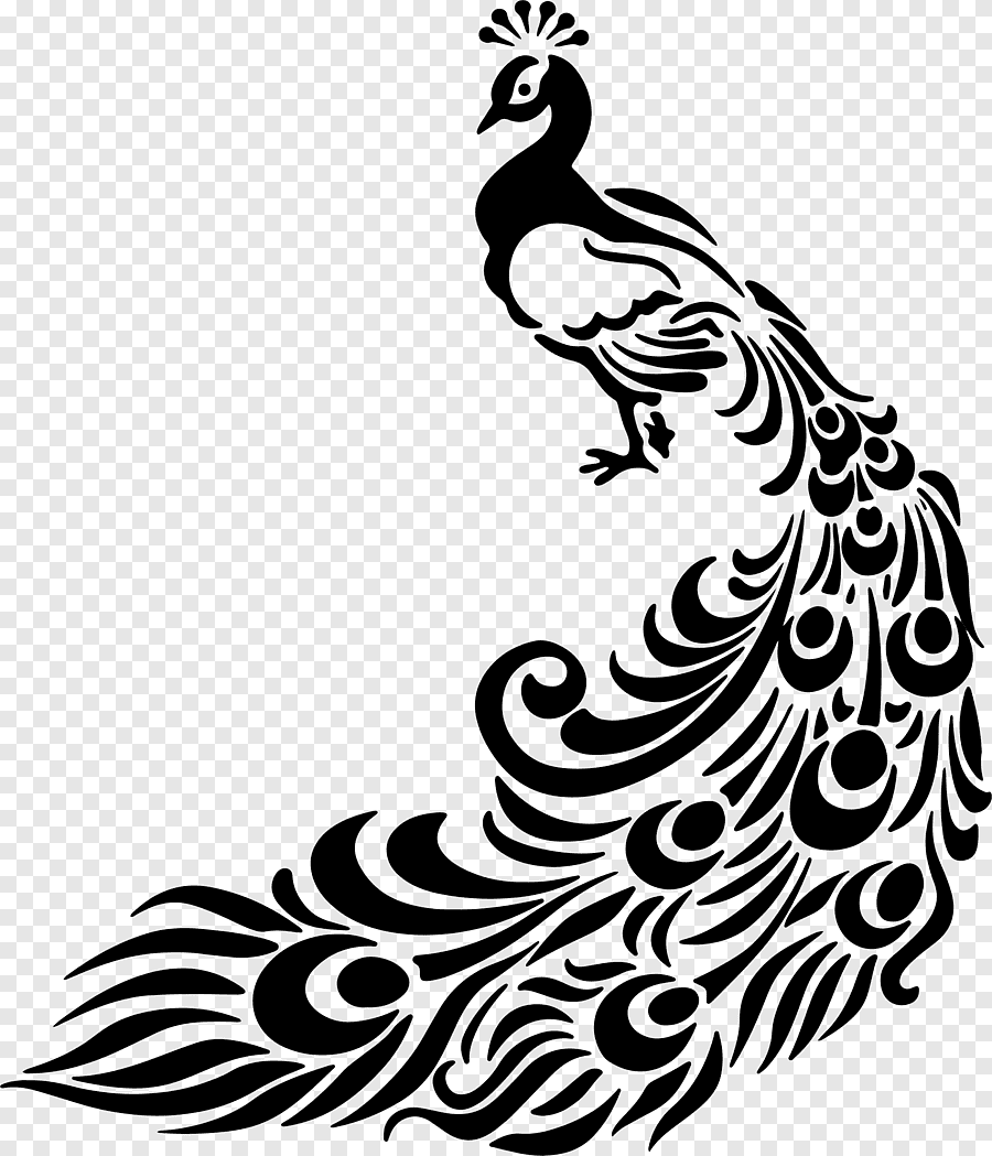 Line Art Peafowl Drawing Peacock Feather White Animals Png Pngegg