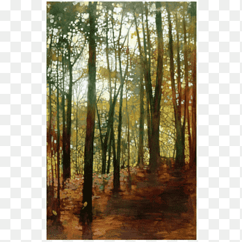 Climate change in the northern. Northern Hardwood Forest Temperate Broadleaf And Mixed Forest Woodland Bayou Forest Sunlight Painting Png Pngegg