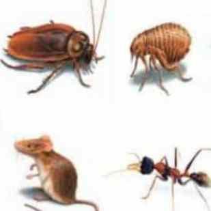 شركة مكافحة حشرات بالليث ، شركة رش حشرات بالليث ، شركة رش مبيد بالليث ، شركة رش مبيدات بالليث ، مكافحة الحشرات بالليث ، رش الحشرات بالليث ، رش المبيدات الحشرية بالليث ، شركة ابادة حشرات بالليث ، ابدة الحشرات بالليث ، شركة مكافحة العثة بالليث ، شركة مكافحة النمل الابيض بالليث ، شركة مكافحة البق بالليث ، شركة مكافحة بق الفراش بالليث ، شركة مكافحة قوارض بالليث ، شركة مكافحة الناموس بالليث ، شركة رش دخان بالليث ، شركة مكافحة الصراصير بالليث ،شركة مكافحة الابراص بالليث ، شركة اصتياد فئران بالليث ، شركات مكافحة الحشرات بالليث ، شركات رش الحشرات بالليث ، اسعار مكافحة الحشرات بالليث ، ارحص شركة مكافحة حشرات بالليث ، ارخص شركة رش مبيد بالليث ، ارخص شركة رش مبيدات بالليث ، شركات رش المبيدات بالليث ، شركات رش المبيد بالليث