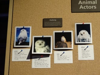The animal actors who played Hedwig