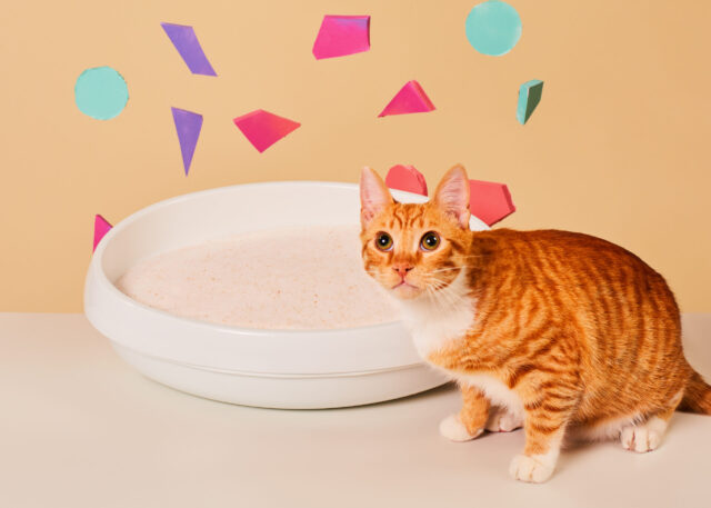 Colorful Cat Litter