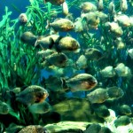 A Stopover in KL: Aquaria KLCC