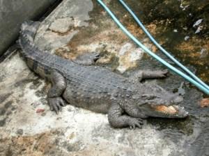 Crocodile Farm, Puerto Princesa