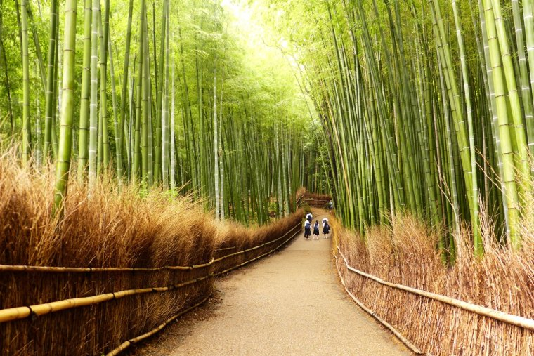 Kyoto Japan travel; What to do in Kyoto Japan; What to see in Kyoto Japan; D.I.Y. Japan itinerary