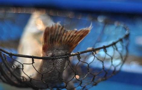 Garak Fish Market