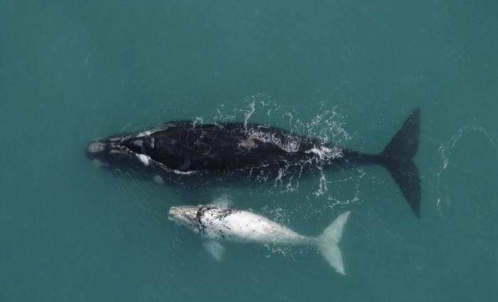 Whale Watching at De Hoop Nature Reserve