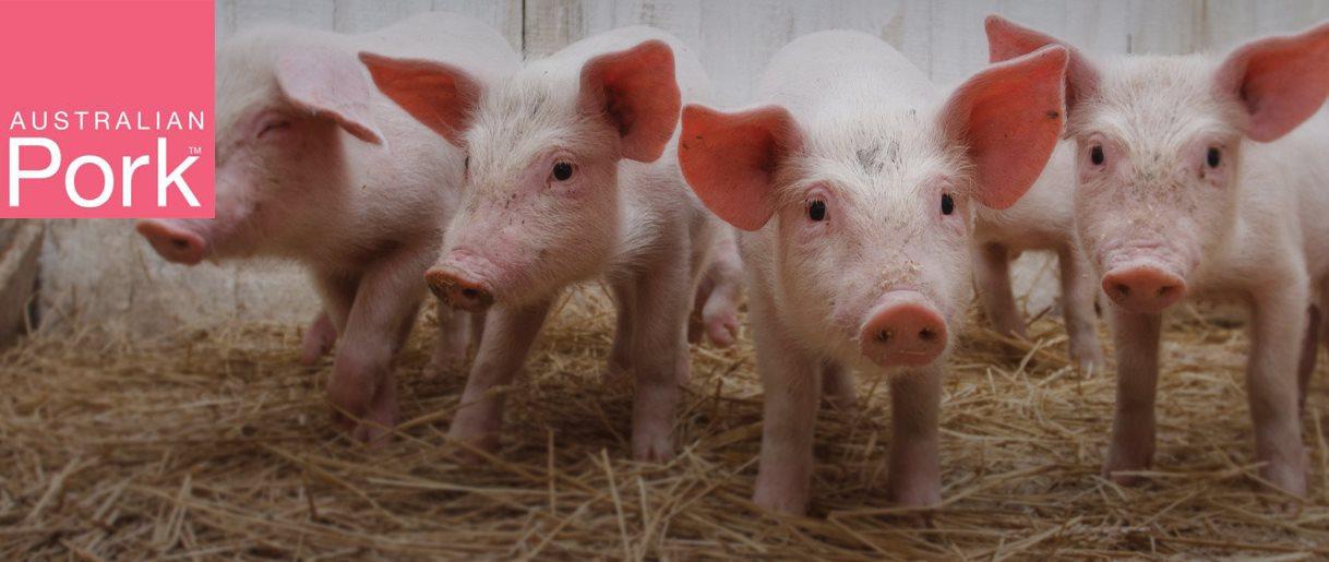 Pigs Aus Pork